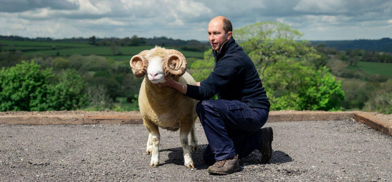 Shepherd Marcus with one of the rams